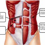 musculos-core