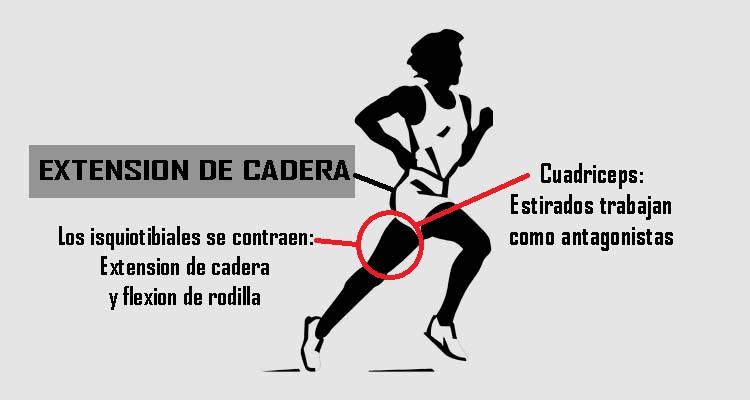 LA IMPORTANCIA DE TENER UNA BUENA EXTENSIÓN DE CADERA – Marathon Ranking